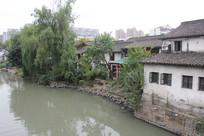 杭州小河直街河边树木