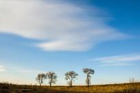 蓝天白云四棵树