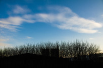 蓝天白云与树木剪影