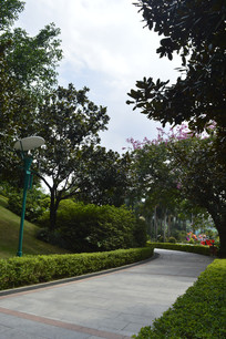 云台花园人行道绿化树木