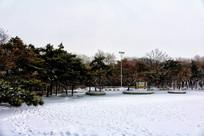 八景广场积雪松林