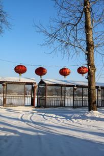 蓝天雪地红灯笼