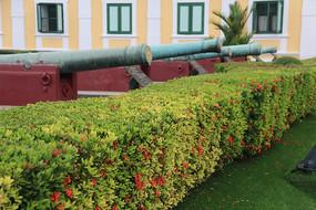 一排礼炮炮管和园艺灌木丛