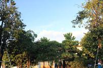 蓝天下的树丛