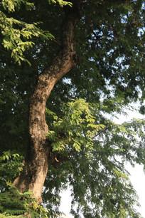 柔光下的树叶背景