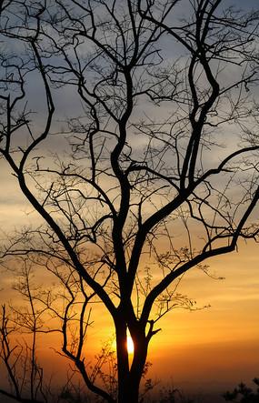 夕阳一棵树剪影