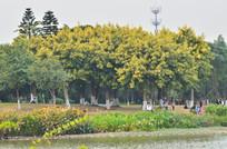 湖边的黄树秋景