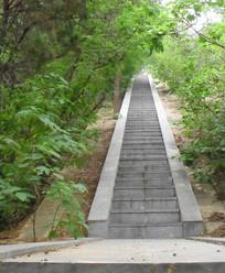 绿植掩映的登山台阶