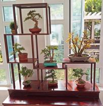 木质花架室内摆设