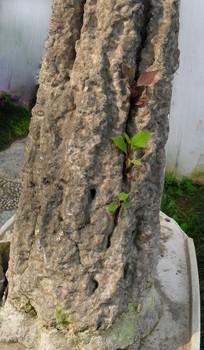 石缝里生长的小草