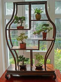 室内木质花架装饰图