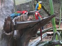 树干上的墨西哥鹦鹉