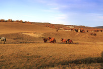 奔马草原秋季傍晚马群