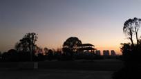 黄昏树木剪影风景