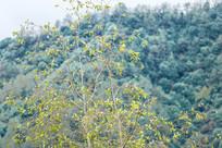 树上的鸟麻雀 百鸟