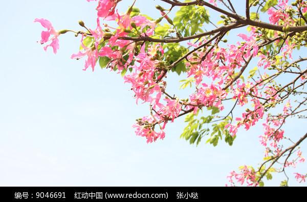夏季花卉图片