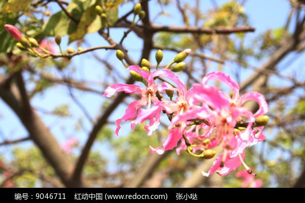 夏天的花卉 图片