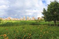 高端住宅绿地野花草地