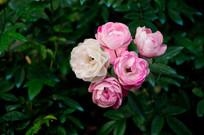 一簇好看的花