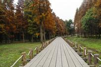 池杉湿地栈道
