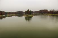 湖湾池杉林