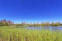 湿地草地湖水高档住宅