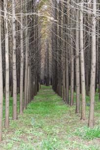 小树林拍摄