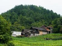 巫山红椿土家族乡山腰上的房屋