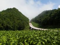 蜿蜒的乡村公路