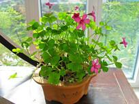 粉色花朵绿植小台摆图片