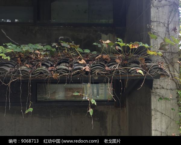 绿色茅屋图片