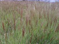 茂盛的草地自然景观摄影