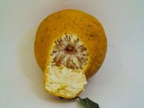 丑橘桔子时令水果摄影图