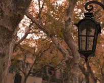 悬铃木与路灯