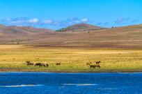 草原上碧蓝的湖水