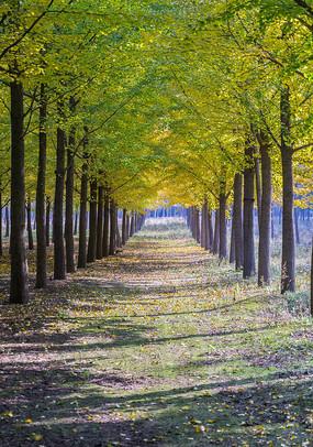 林间小道图片