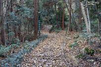 铺满落叶的山道