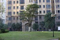 小区的树木