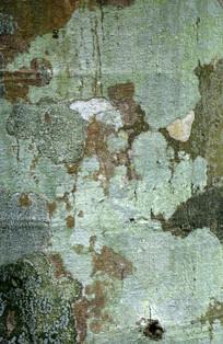 菠萝蜜树皮纹理背景图案