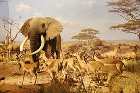 动物标本大象和羚羊