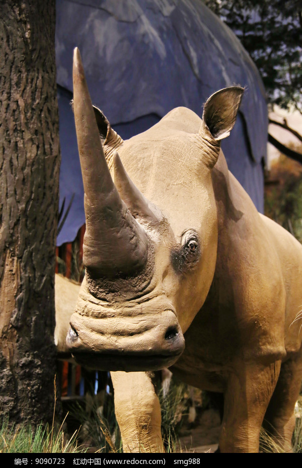 动物标本非洲犀牛