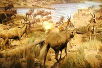 动物标本水边的羊群