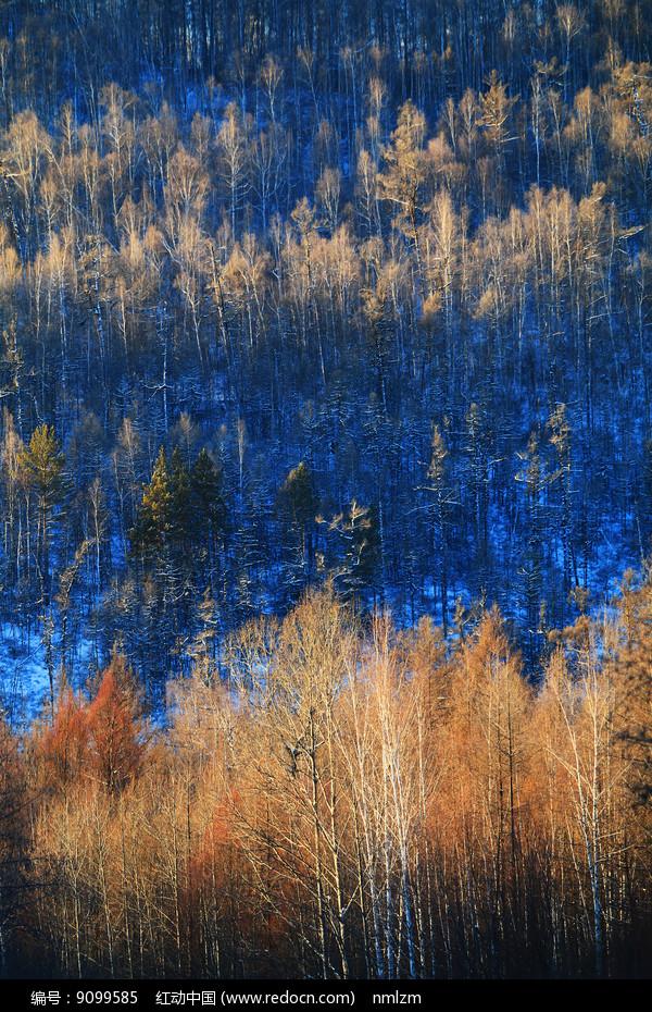 大兴安岭林海雪原风光图片