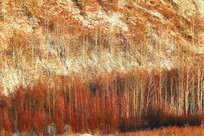 林海雪原地理风光