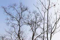冬日里树木