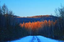 林海雪原树林雪景