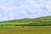 农田防护林