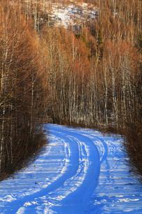 森林雪路蜿蜒
