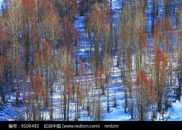 山坡树林雪景图片