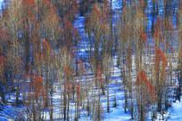 山坡树林雪景